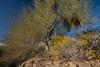 SON-2008-026: El Pinacate, Mpo. Puerto Peñasco, Sonora, Mexico