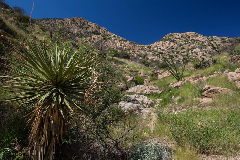 SON-2012-084: Sierra Purica, Mpo. Bacoachi, Sonora, Mexico