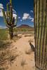 SON-2007-039: El Pinacate, Mpo. Sonoyta, Sonora, Mexico