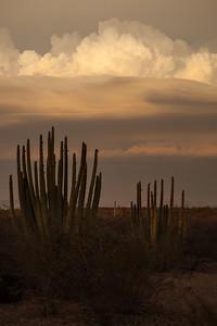 SON-2012-125: Las Conchas, Mpo. Hermosillo, Sonora, Mexico