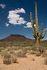SON-2007-037: El Pinacate, Mpo. Sonoyta, Sonora, Mexico