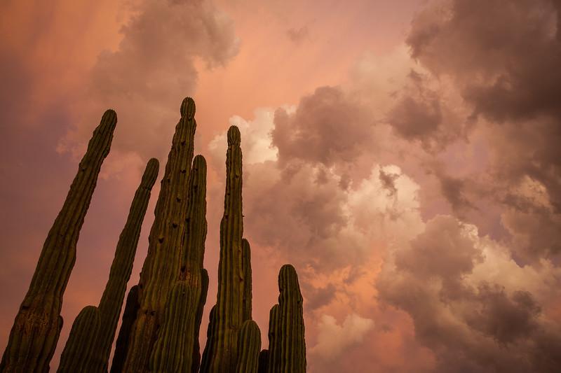 SON-2012-131: Las Conchas, Mpo. Hermosillo, Sonora, Mexico