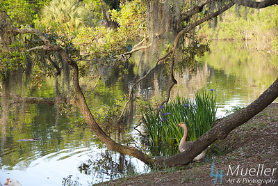Goose and Irises