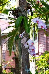 FL orchids0214