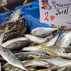 Horse Mackerels, Sant Antoni market, town of Barcelona, autonomous commnunity of Catalonia, northeastern Spain