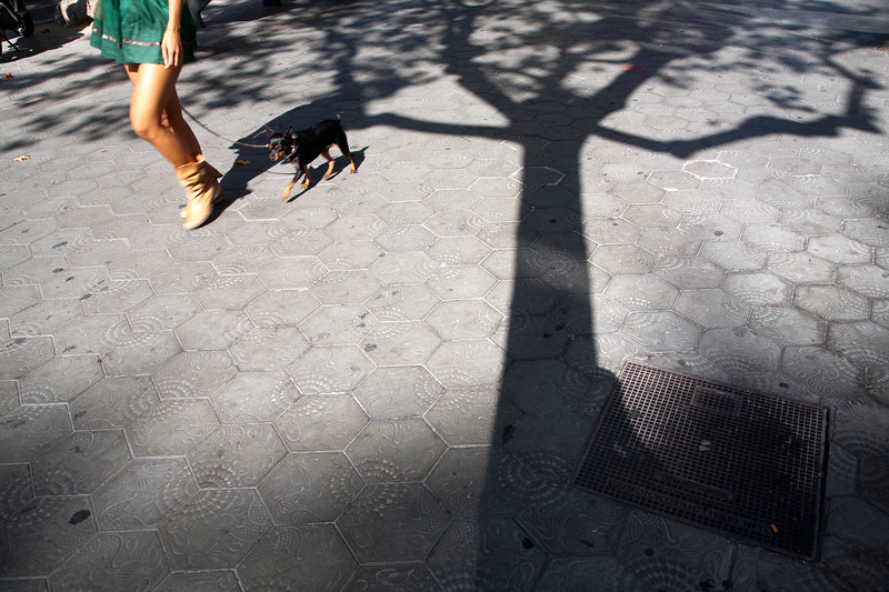 Girl walking the dog, Passeig de Gracia, town of Barcelona, autonomous commnunity of Catalonia, northeastern Spain