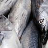 Small tuna, Boqueria market, town of Barcelona, autonomous commnunity of Catalonia, northeastern Spain