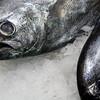 Pompano fish, Boqueria market, town of Barcelona, autonomous commnunity of Catalonia, northeastern Spain