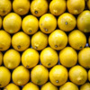 Lemons, Boqueria market, town of Barcelona, autonomous commnunity of Catalonia, northeastern Spain