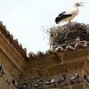 Stork and doves, Santa Maria la Mayor church, Brozas, Caceres, Spain