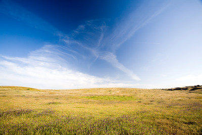 Meadow, province of Caceres, region of Extremadura, Spain