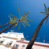 Old, tall palm trees are everywhere in Cadiz, givig a sense of Tropical place to the city.