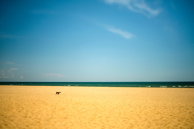 Lonely dog on a beach, Ayamonte, Spain.