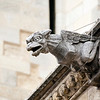 Gothic gargoyle, Cathedral of the town of Leon, autonomous community of Castilla y Leon, northern Spain