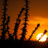 Sunset in Doñana marshland, town of Sanlucar de Barrameda, province of Cadiz, Andalusia, Spain.