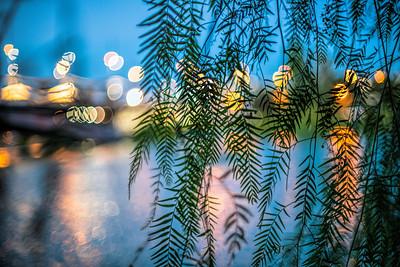 Tree leaves by the Guadalquivir river, Seville, Spain