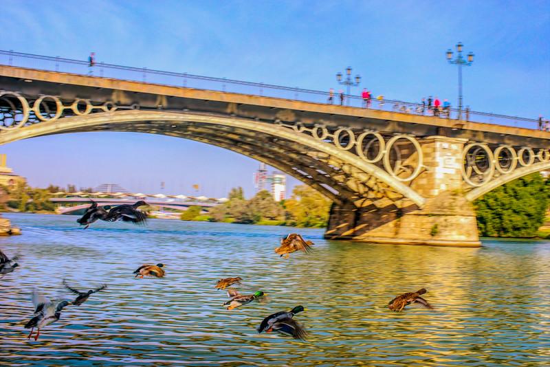 Flying ducks in front of Triana Bridge, Seville, Spain