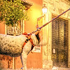 Tied dog, San Lorenzo square, Seville, Spain