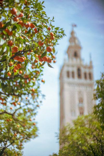 The Giralda Tower from the Court of the Oranges, Seville, Spain