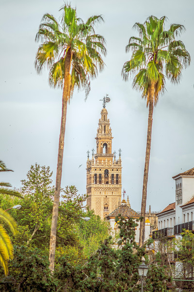 The Giralda Tower framed by two palm trees, Seville, Spain
