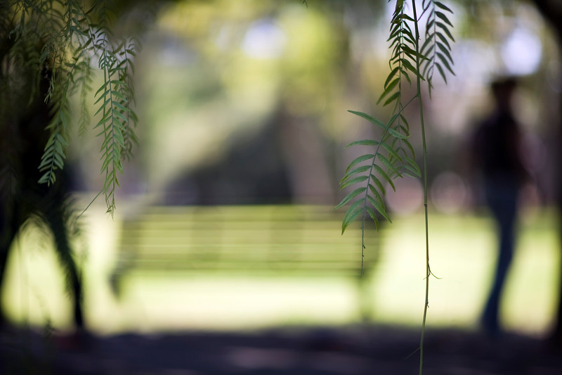 Farewell in the park, selective focus on the foreground leaves, Seville, Spain
