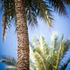 Palm trees, Seville, Spain