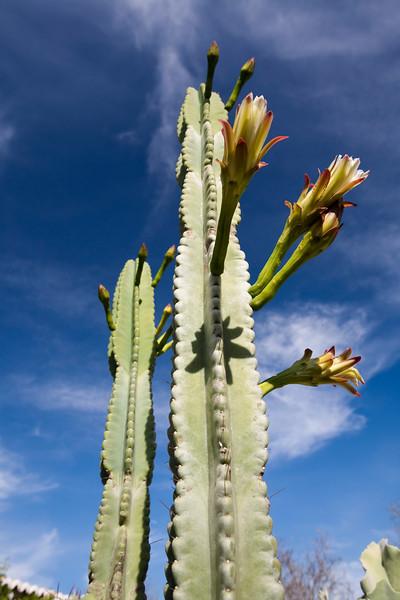 Cactus, Faro, Portugal