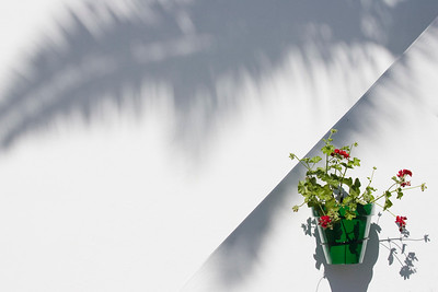 Flower pot on a whitewashed wall, Seville, Andalusia, Spain