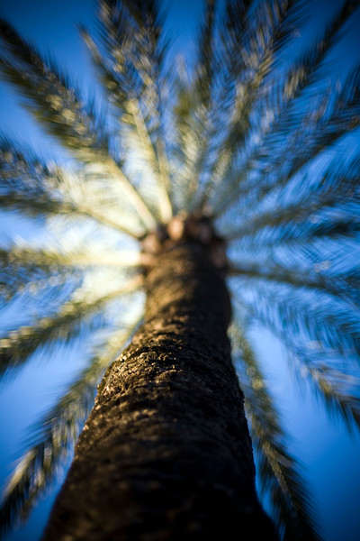 Palm tree, Seville, Spain
