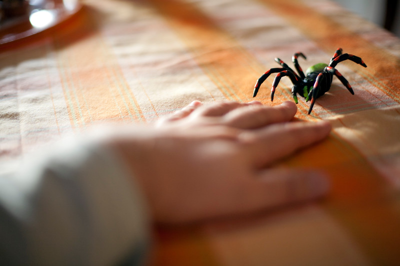 Child's hand playing with a plastic spider on a table, Seville, Spain
