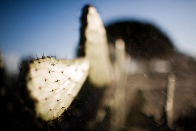 Cactus, Seville, Spain