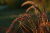 """""""Sunlit Grasses"""""""