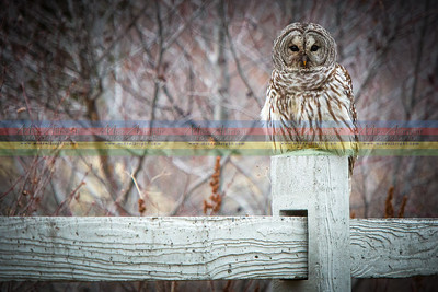 2013-01-27_owl-11