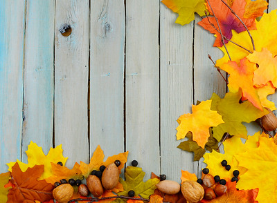 Fall or autumn border of colorful silk leaves, pinecones, nuts and twigs all on a rustic wooden background painted blue. The wooden planks run vertically. Copy space.