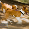 Two puppies playing and chasing each other in a park<br /> pet release #0013