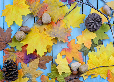 Fall or autumn background of colorful silk leaves, pinecones, nuts and twigs all on a rustic wooden background painted blue