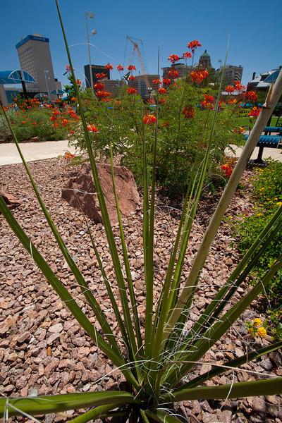 TX-2009-081: El Paso, El Paso County, TX, USA
