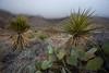 TX-2011-065: El Paso, El Paso County, TX, USA