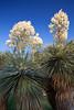 TX-2011-004: El Paso, El Paso County, TX, USA