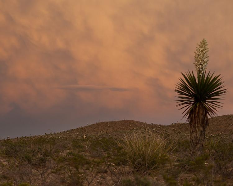 TX-2010-032: Quitman Canyon, Hudspeth County, TX, USA