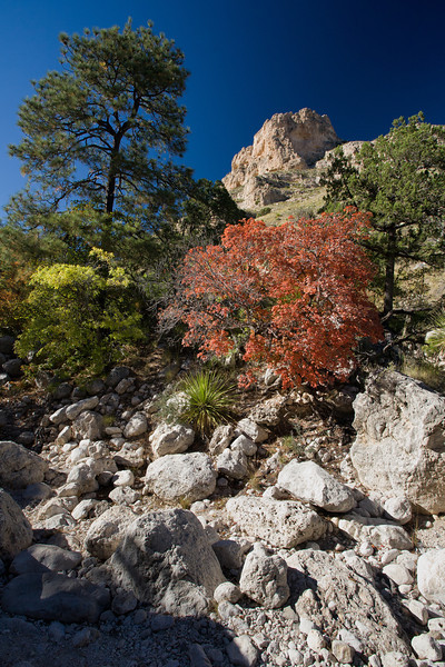 TX-2008-050: Guadalupe Mountains NP, Culberson County, TX, USA