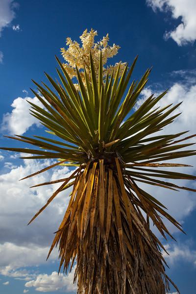 2012-198: Quitman Canyon, Hudspeth County, TX, USA