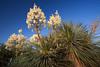 TX-2011-007: El Paso, El Paso County, TX, USA