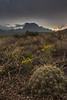 TX-2013-150: Big Bend National Park, Brewster County, TX, USA