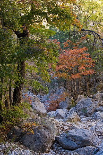 TX-2008-056: Guadalupe Mountains NP, Culberson County, TX, USA