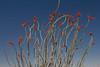 TX-2013-165: Big Bend National Park, Brewster County, TX, USA