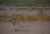 TX-2012-112: Alamo Reservoir 3, Hudspeth County, NM, USA