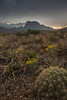 TX-2013-149: Big Bend National Park, Brewster County, TX, USA