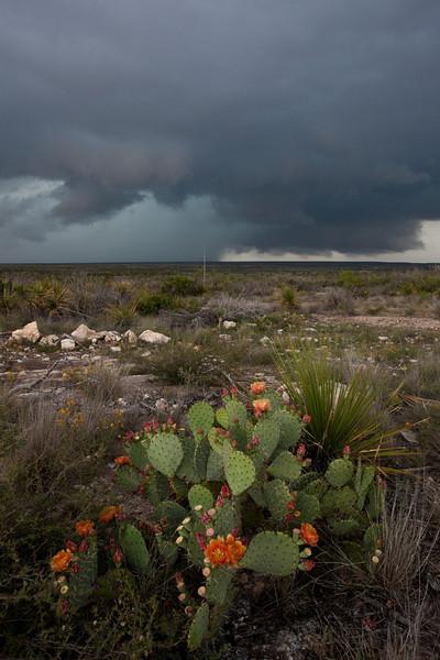 TX-2010-059: , Pecos County, TX, USA