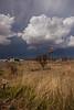 TX-2013-275: Marfa, Presidio County, TX, USA